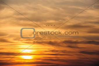 flying birds on dramatic sunset background
