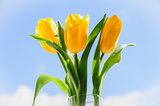 yellow tulips in vase on window sill