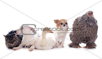 five animal