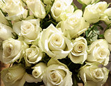 Bunch of greenish white roses, background