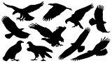 eagle silouettes