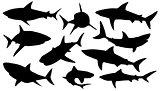 shark silhouettes