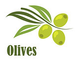 Green olives branch