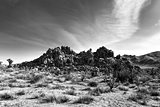 Landscape in Joshua Tree National Park