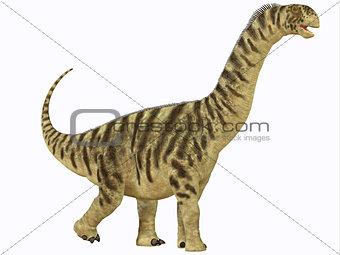 Camarasaurus Juvenile