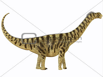 Camarasaurus Profile