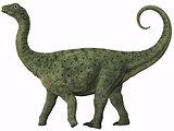 Saltasaurus Juvenile