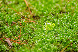 Moss and water drops