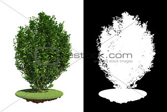 Green Bush with green grass on White Background.