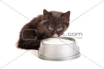 Black kitten drinks milk, on a white background