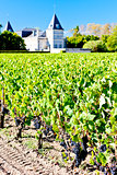 vineyard and Chateau Tronquoy Lalande, Saint-Estephe, Bordeaux R