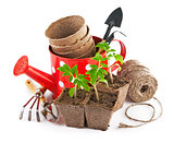 Garden tools with seedlings vegetable