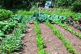 Fresh vegetabiles