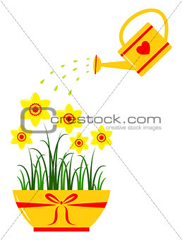daffodils and watering can