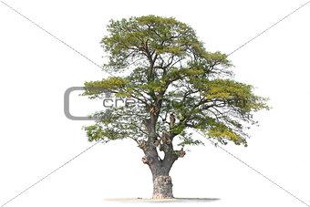 Beautifull tree