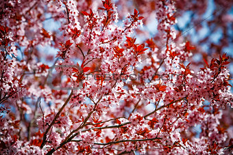 blossoming flowers on a tree in spring