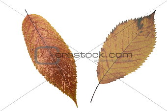 abstract grungy faded leaves