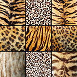 collection of wild cats fur