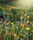 Autumnal garden flowers