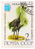 Stamp printed in USSR (Russia) shows a bird Grus monacha with th