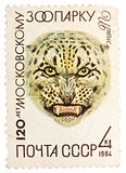 Stamp printed in Russia, shows Snow leopard in Moscow Zoo, 120th