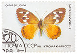 Stamp printed in the USSR (Russia) shows a Butterfly with the in