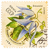 Stamp printed in USSR (CCCP, soviet union) shows alpine bluebell