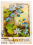 Stamp printed in USSR (CCCP, soviet union) shows anemone hepatic