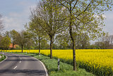 Road along a rapeseed field
