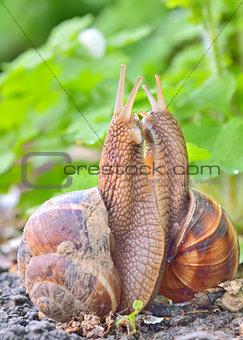 love snails