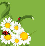 vector ladybird green background