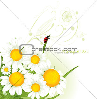 chamomile design