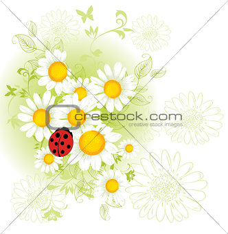 Chamomil floral background