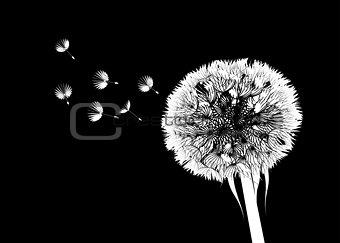 Vector silhouette of a dandelion