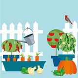 garden of vegetables