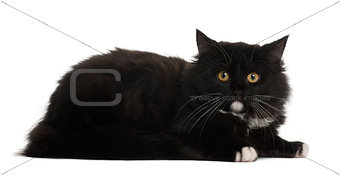 Cat in front of white background