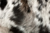 Close up of on the dog's fur in front of white background