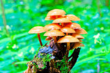 bunch of toadstools growing on a stump in the forest