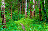 green summer forest and footpath