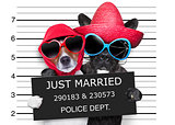 just married mugshot