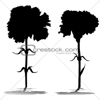 carnations silhouettes