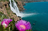 flowers and waterfall