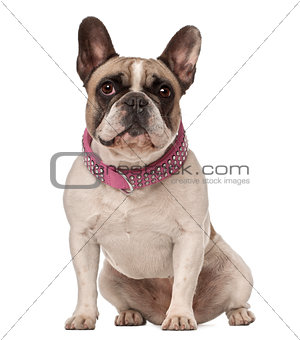 French Bulldog, 4 years old, sitting against white background