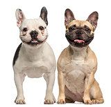 Two French Bulldogs, 3 years old, sitting and panting, isolated
