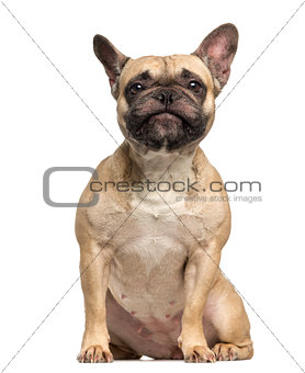 French Bulldog, 3 years old, sitting and making a face, isolated
