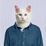 Cat wearing a spotted shirt, spotted background