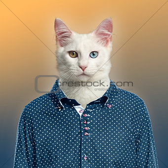 Cat wearing a spotted shirt, colored background
