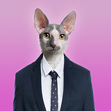 Cat wearing a suit, pink background