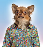 Chihuahua wearing a spotted shirt, colored background