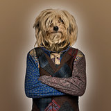 Dog wearing a shirt, brown background